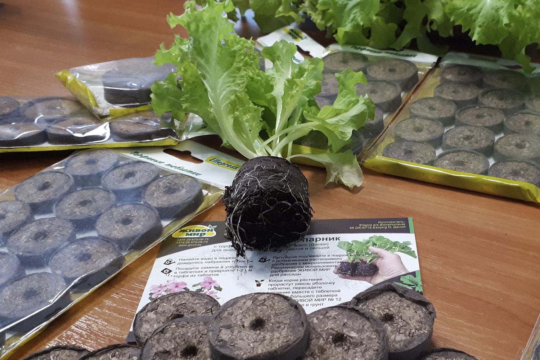 как правильно сажать семена в торфяные таблетки